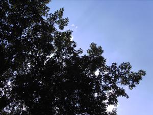 Wundervoller Schattenspender am gestrigen Tag