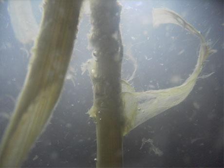 Flüssigkeiten Tod
