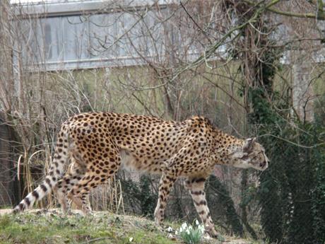 doku125_zoo02