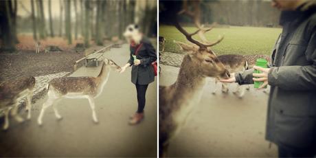 An einem der noch nicht ganz so kalten Wochenenden ging es in den Kölner Stadtwald zum Rehe füttern und streicheln. Selbst der Hirsch kam an!