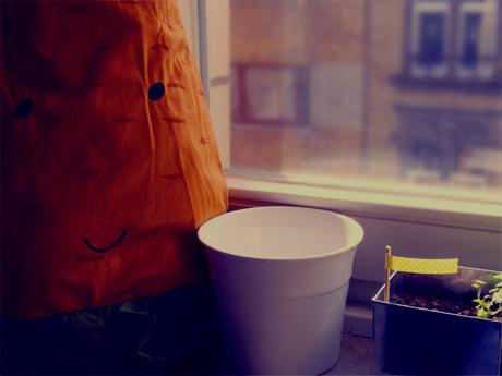 Möhrenkuscheltier in der Küche neben den Küchenkräutern...