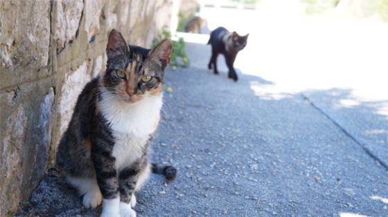 Kroatische Katzen