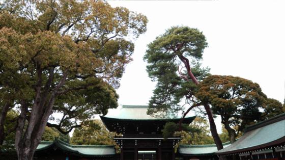 Der Meiji Schrein in Harajuku