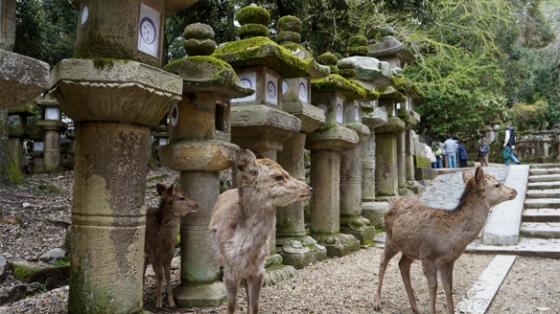 Die 1800 Steinlaternen des Kasuga-Taisha.